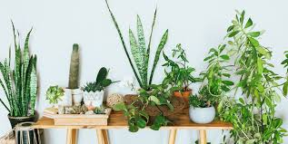 5 Plants That Can Make Anyone Happy!!!